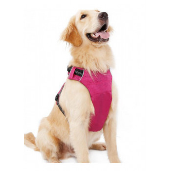 hondenharnassen