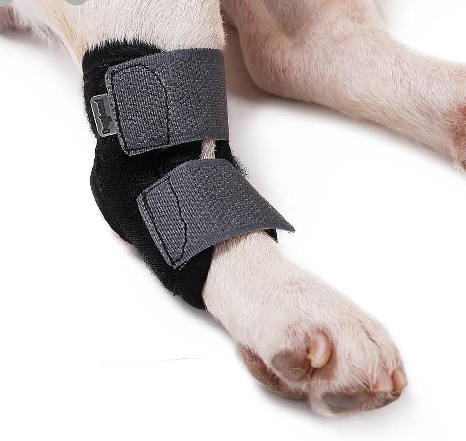 elleboog brace voor hond