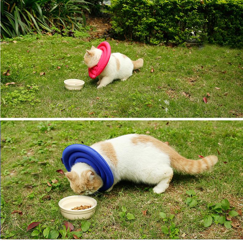 kattenkraag - doegly