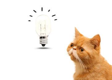 een nieuw product idee voor uw hond of kat