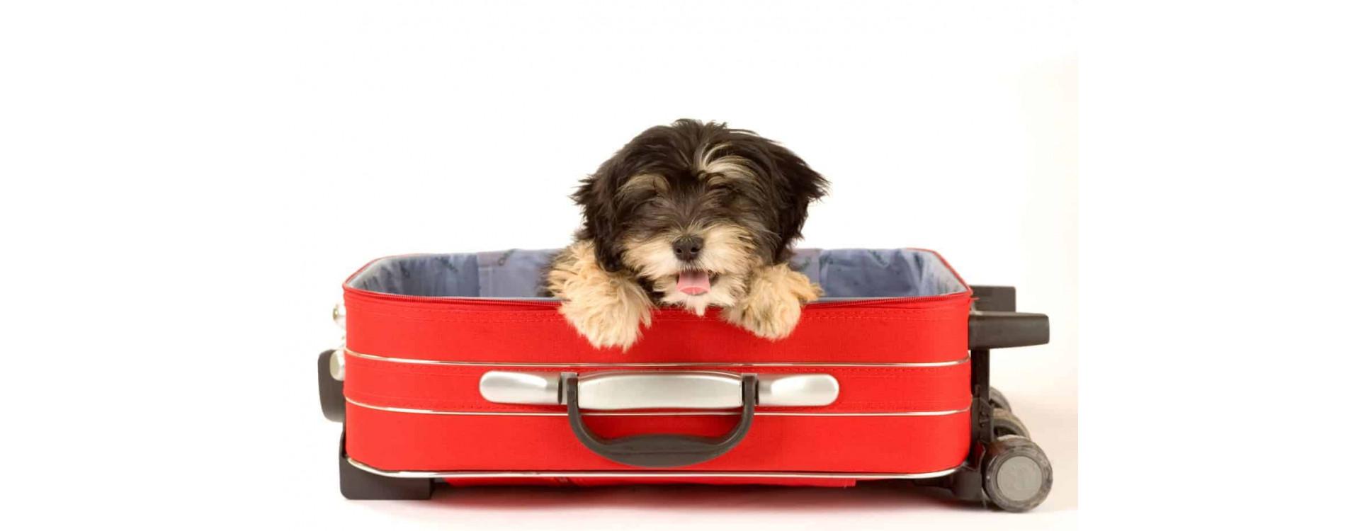 Met de hond op reis