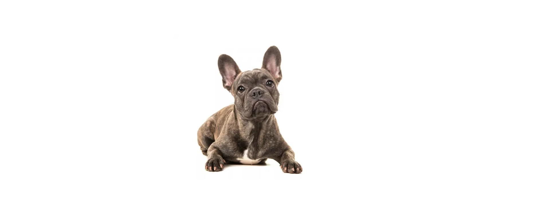 Honden weetjes