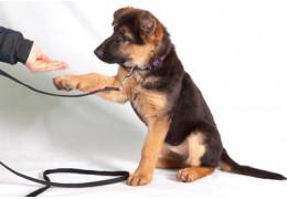Hoe leer ik mijn hond aan de honden lijn lopen? En hoe doe ik een halsband hond om?