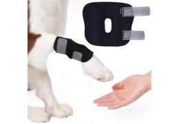 Informatie over het gebruik van een honden brace.