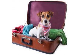 De hond mee op reis? het kan, met deze doegly tips